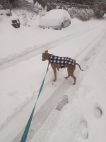 Scooby in the Snow